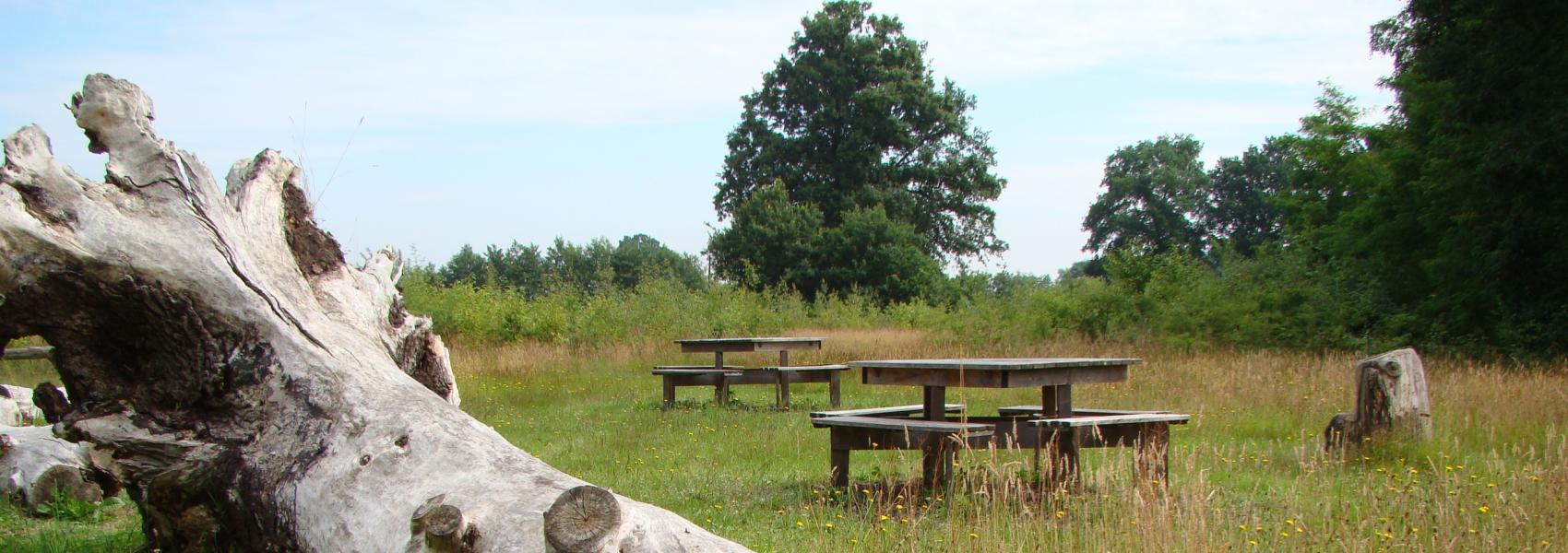 oude omgevallen boomstam bij picknickbanken