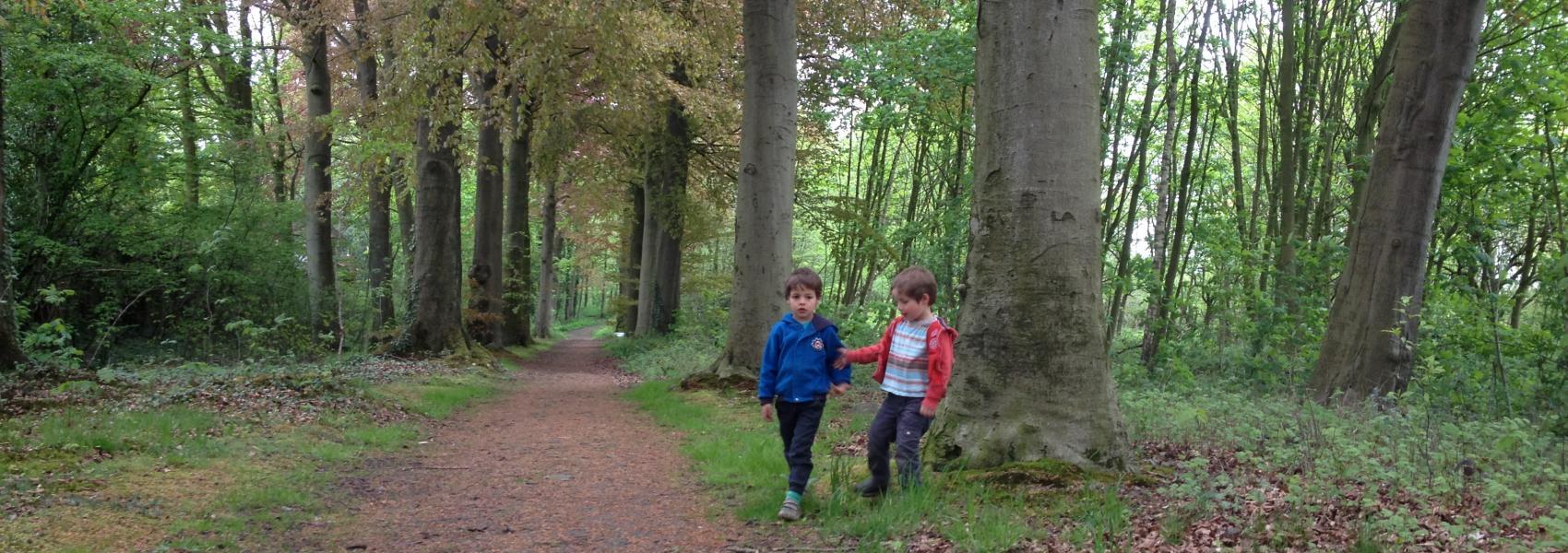Vinderhoutse bossen - Griet Buyse