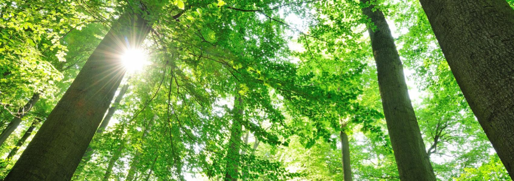 zicht op de bomen vanuit kikkerperspectief