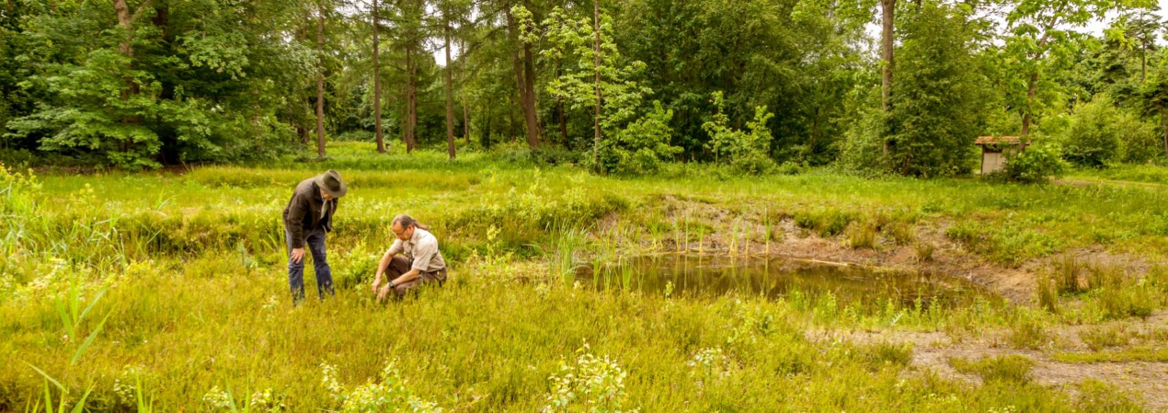 2 boswachters die samen planten bestuderen