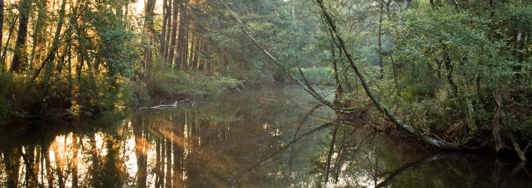 beek door het bos