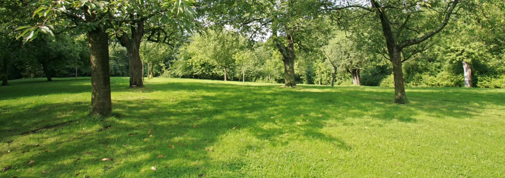 zicht over het park