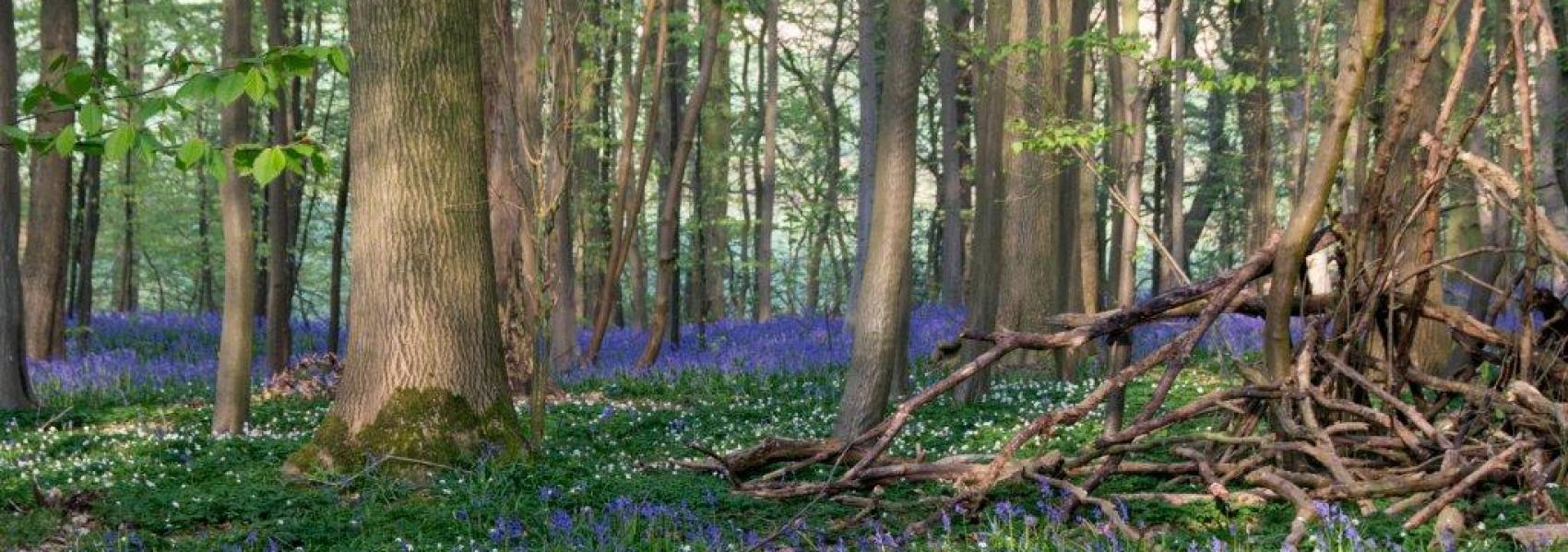 Bos Ter Rijst voorjaarsflora