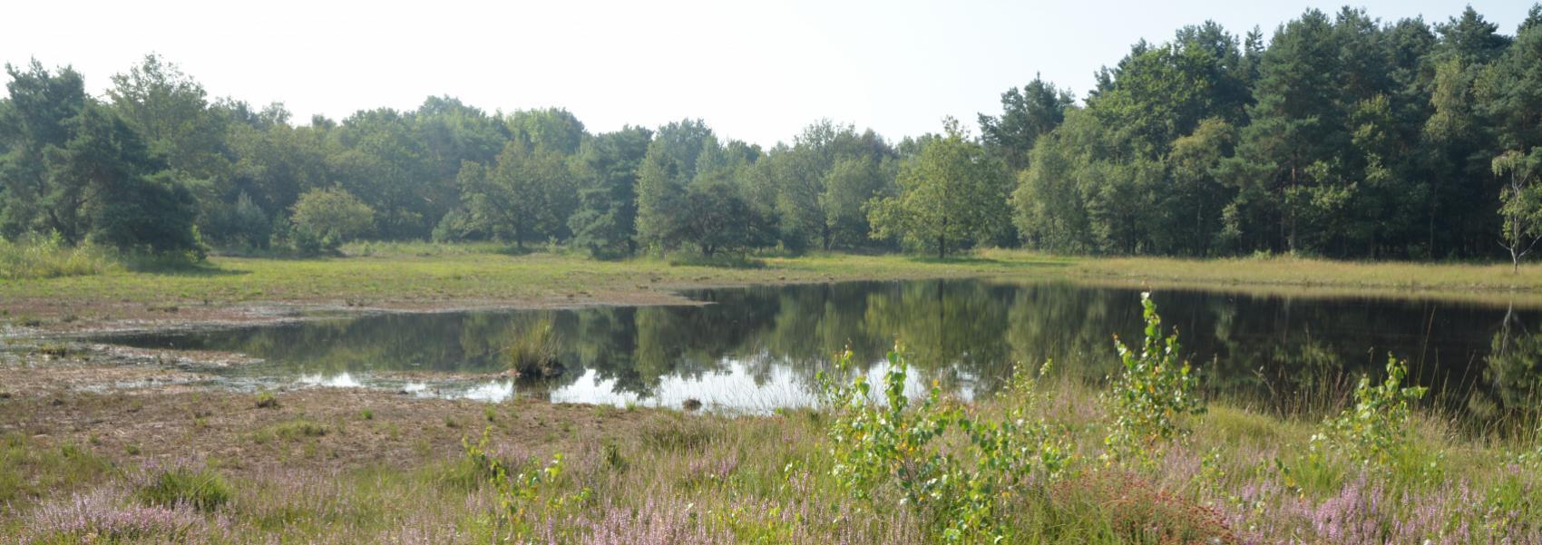Heideveld in Abtsheide
