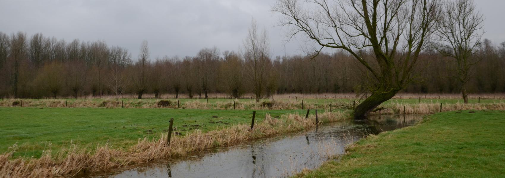 Landschap in de Vinderhoutse bossen - Jean-Pierre Nicaise