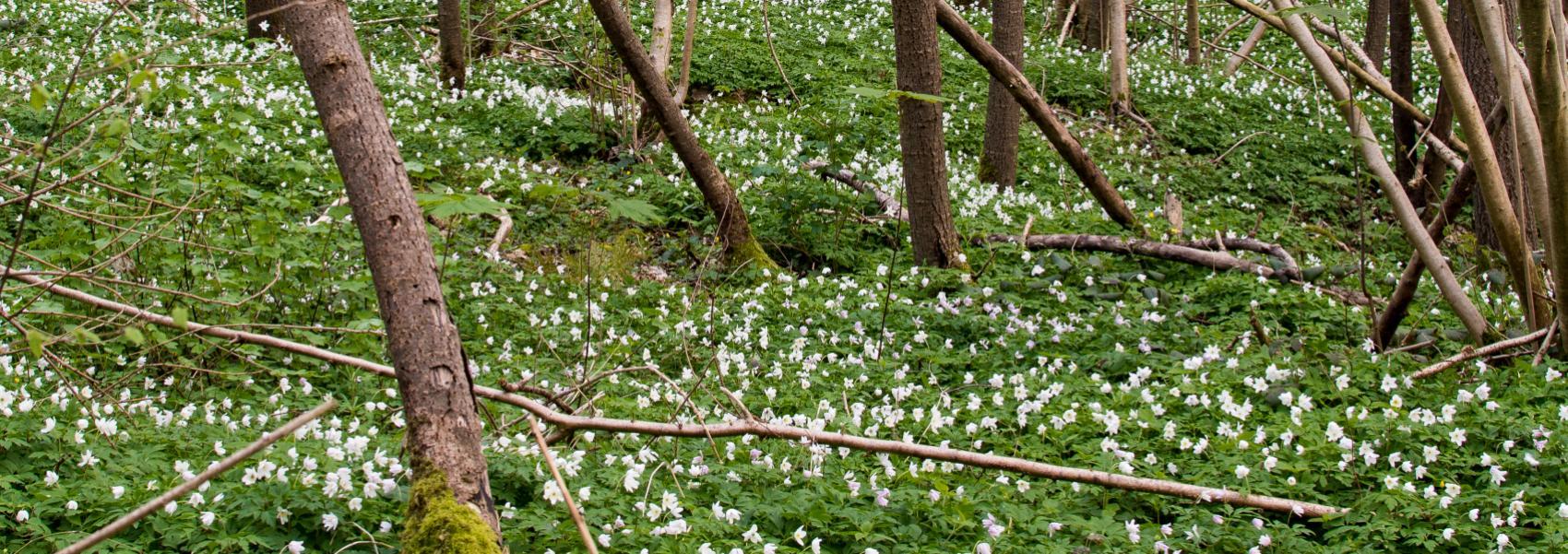 wit bloementapijt in het bos