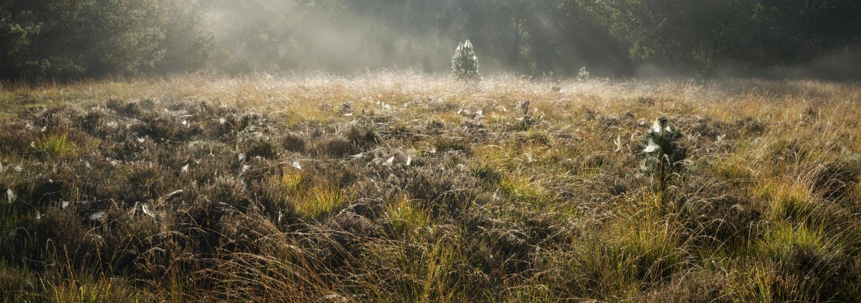 zicht op het graslandschap