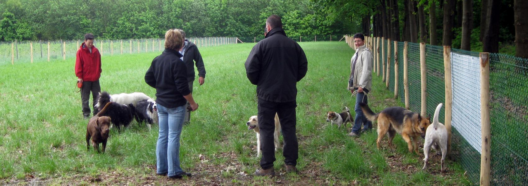hondenzone in Noordheuvel