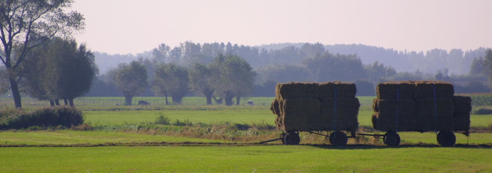 hooiwagen in het landschap