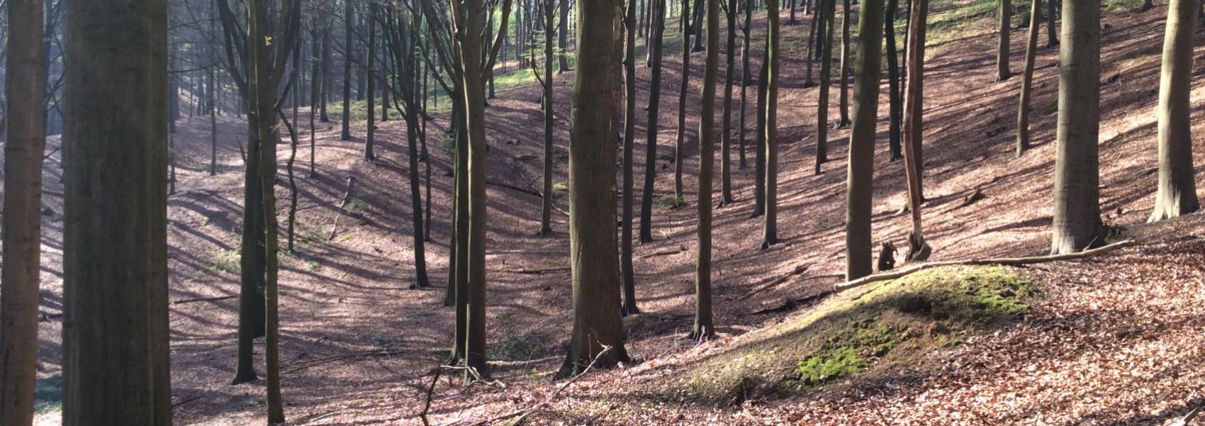 golvend landschap in het bos