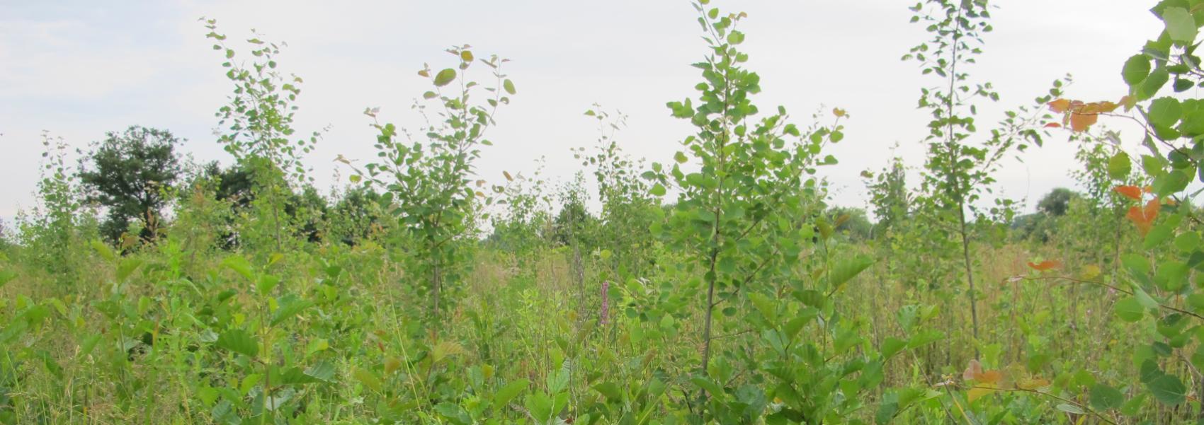 Jonge boompjes in het Parkbos