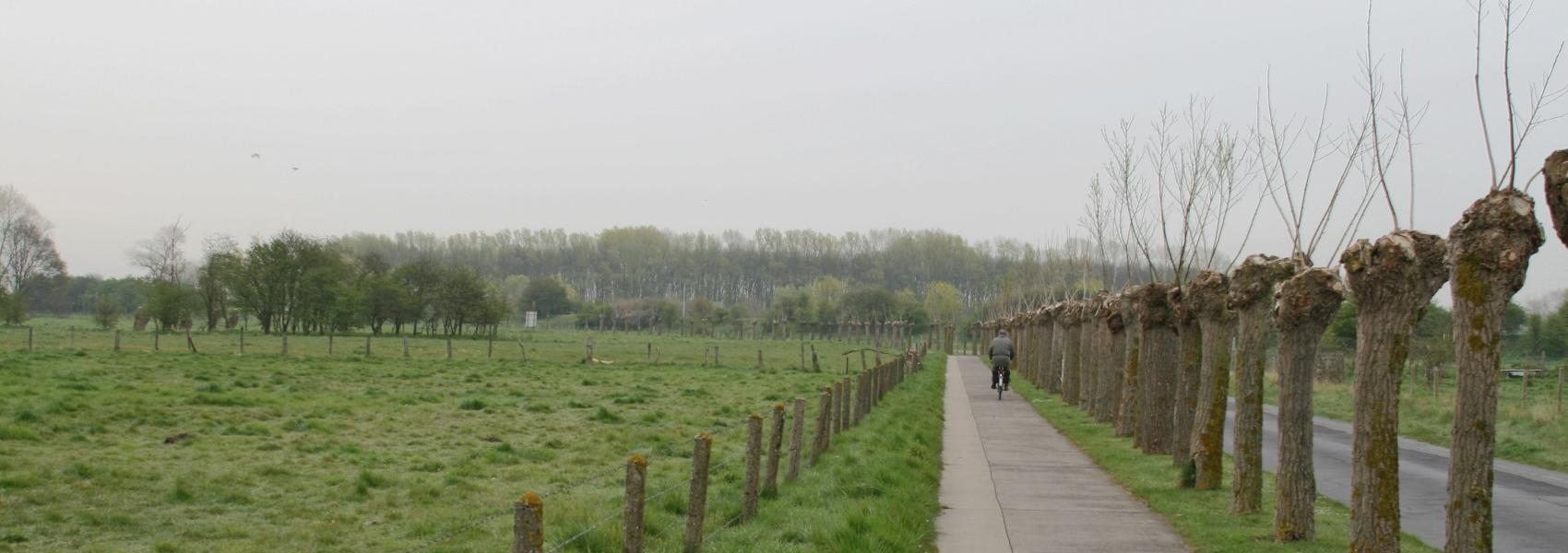 fietser op fietspad langs wilgenrij