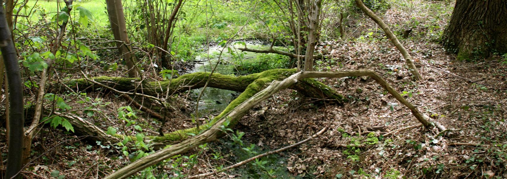 beekje in het bos