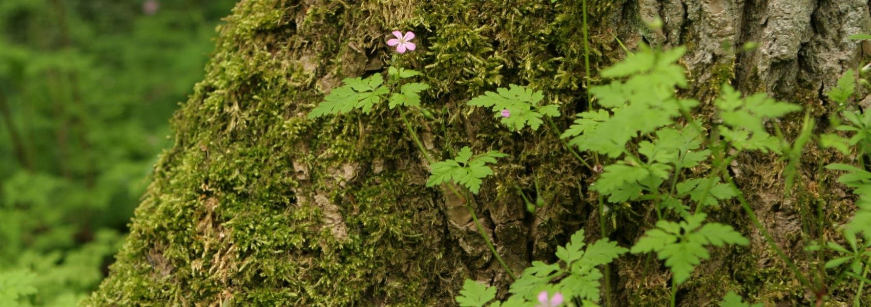 een boomstam vol mos