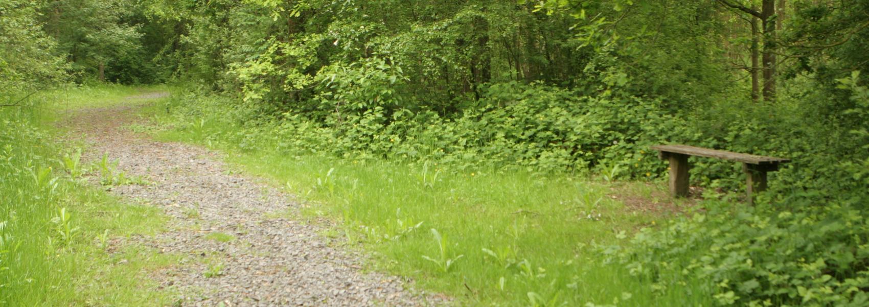 een paadje in het bos