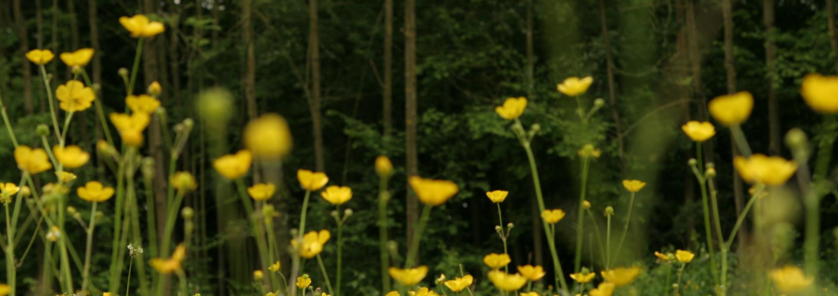 een bloemenweide