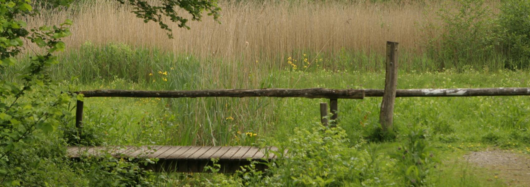 een knuppelpad in het landschap