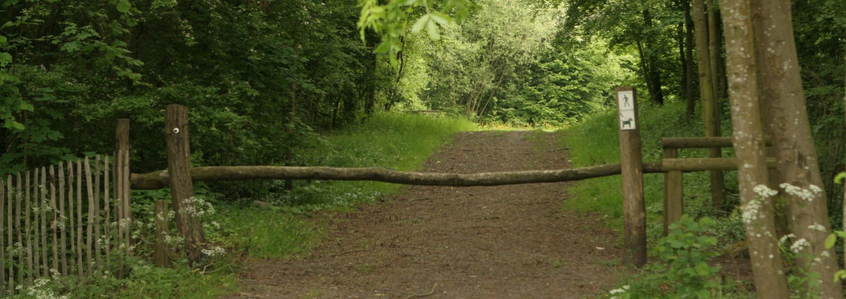 een dreef in het bos