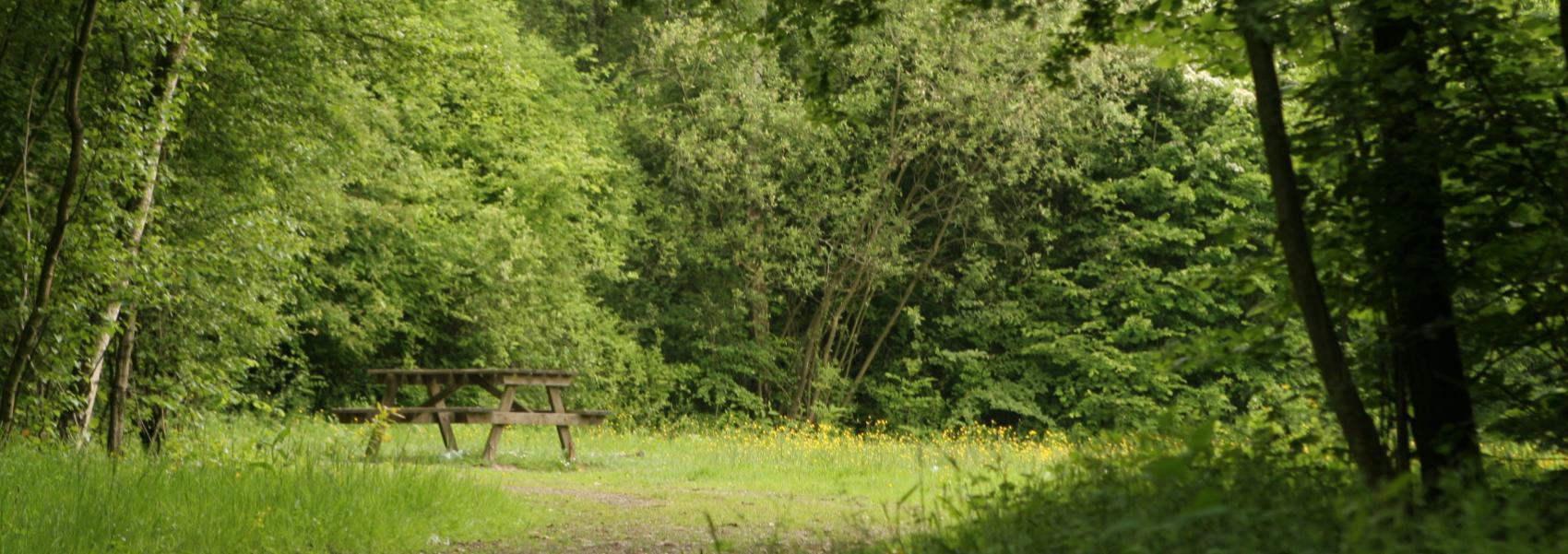 een picknickbank in het bos