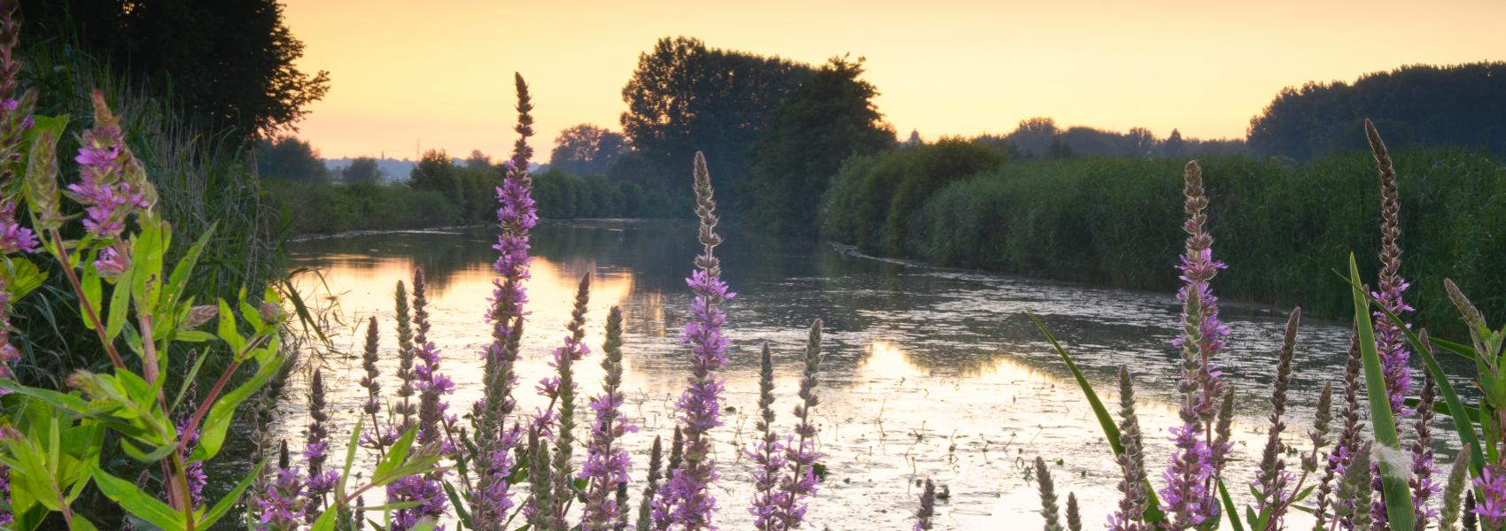zicht op het water met op de voorgrond paarse bloemen