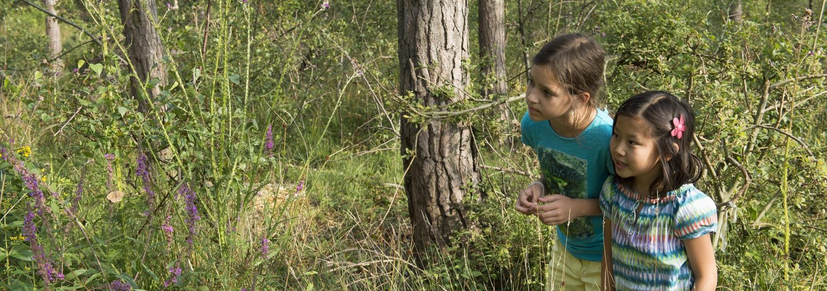 kinderen bewonderen de natuur
