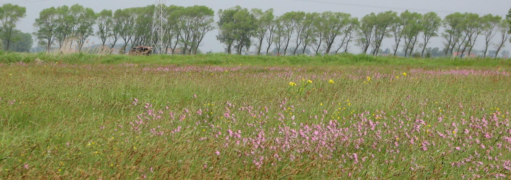 zicht op een een bloemrijk grasland