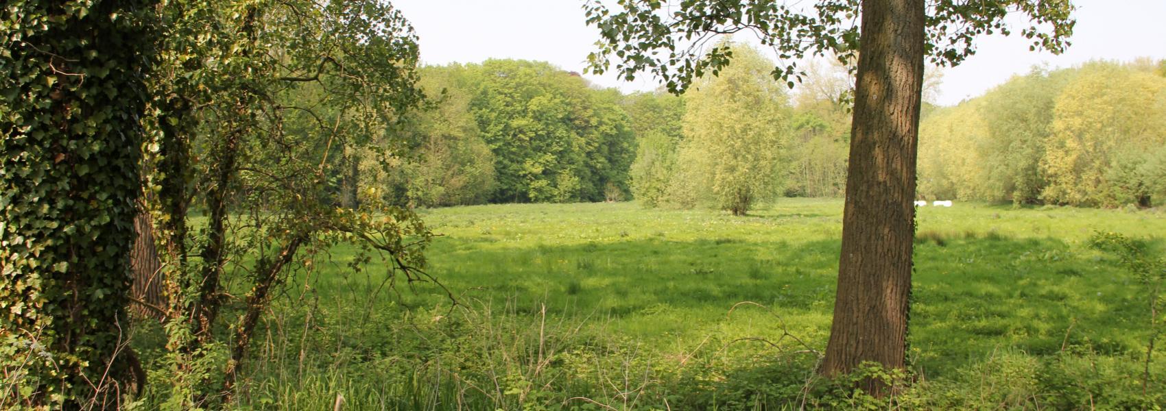 zicht op het landschap
