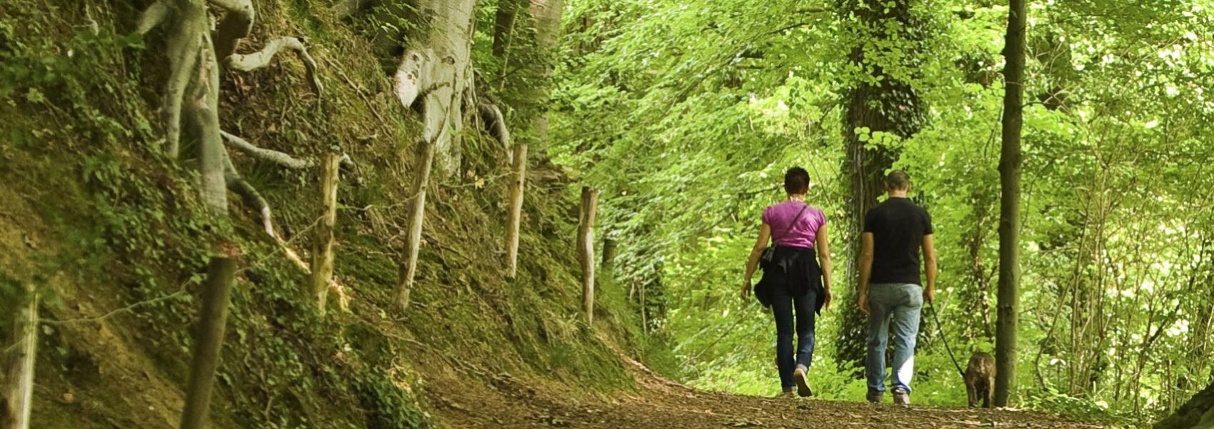 wandelaars in het bos