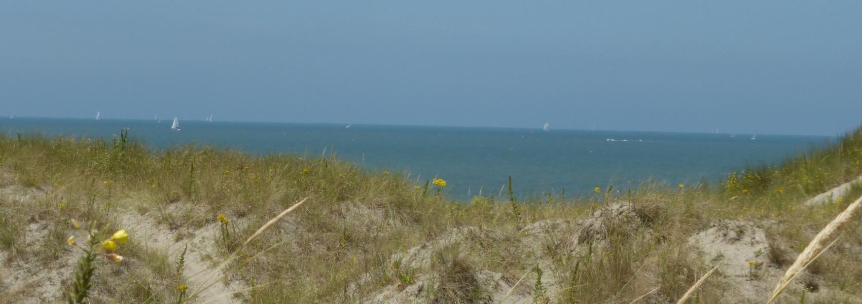 duinen met op de achtergrond zee