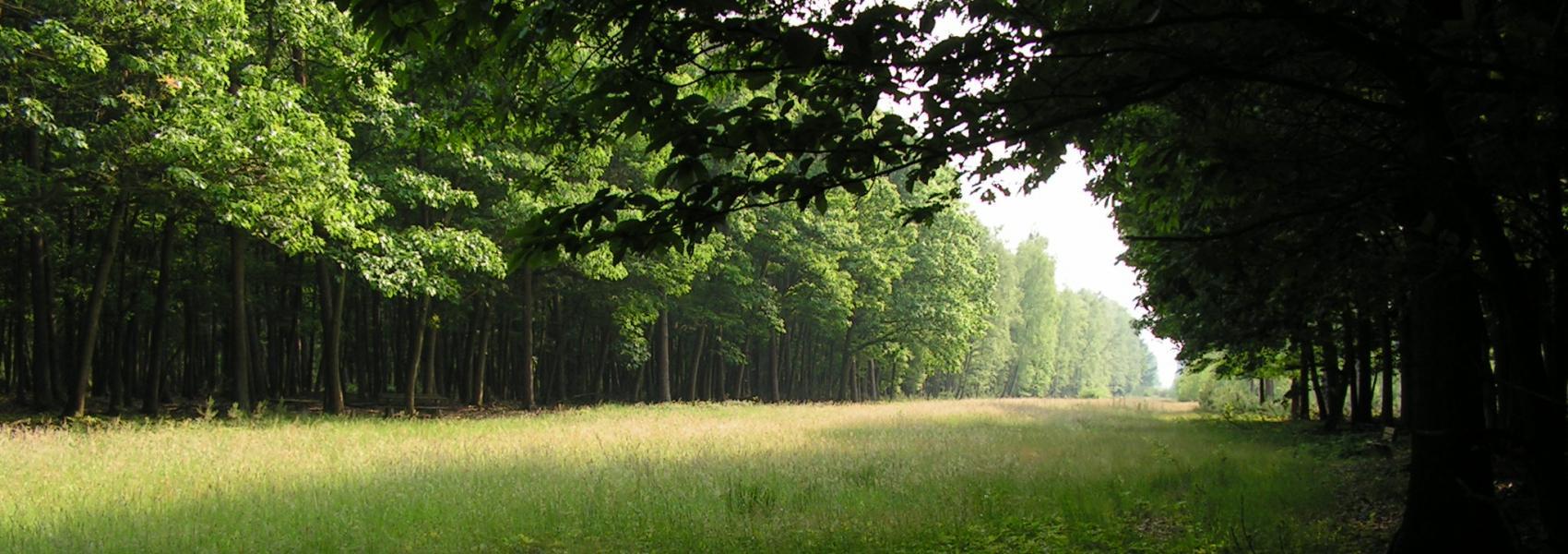 zicht op het bos
