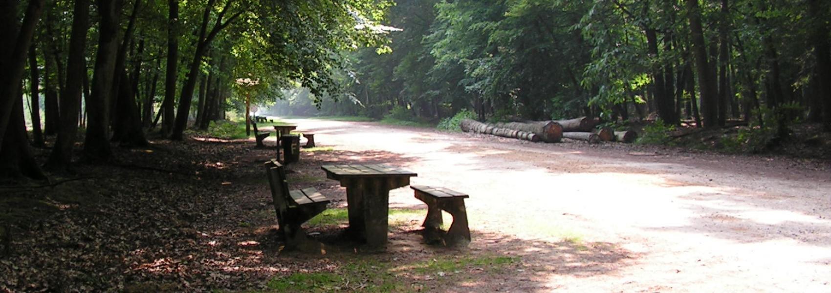 picknickbanken in het bos