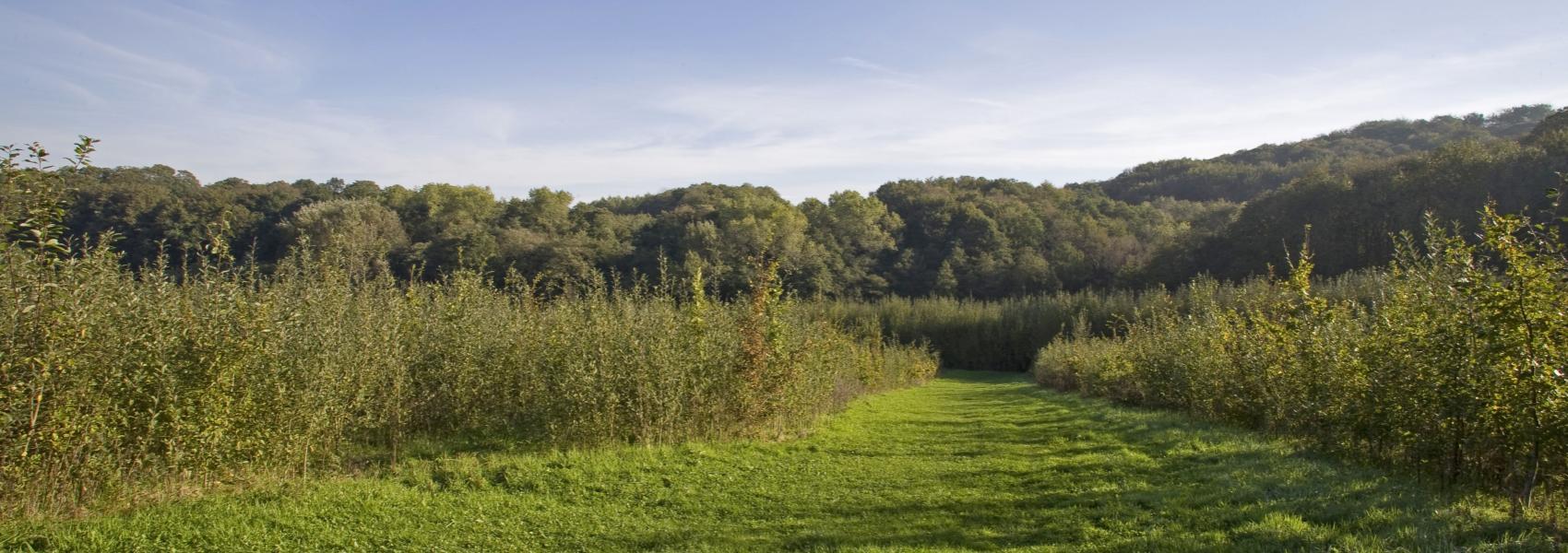 grasdreef met op de achtergrond het bos