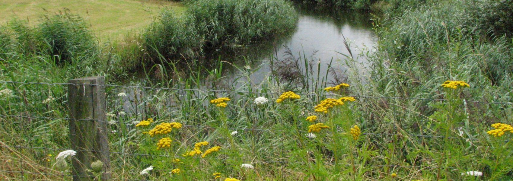 bloemenweide met daar achter water en graslandschap