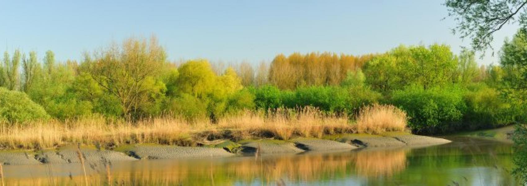 mangrove van de schelde