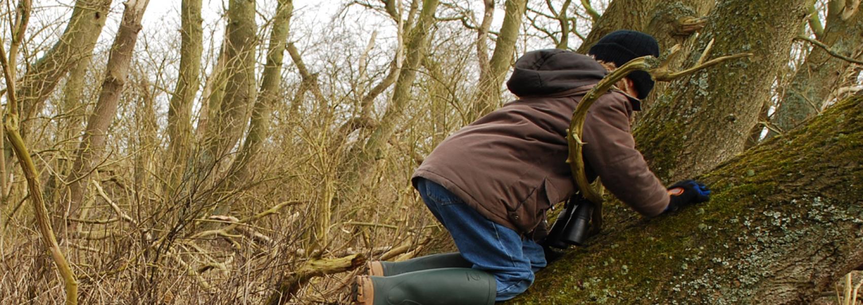 kind aan het klimmen op een boomstam