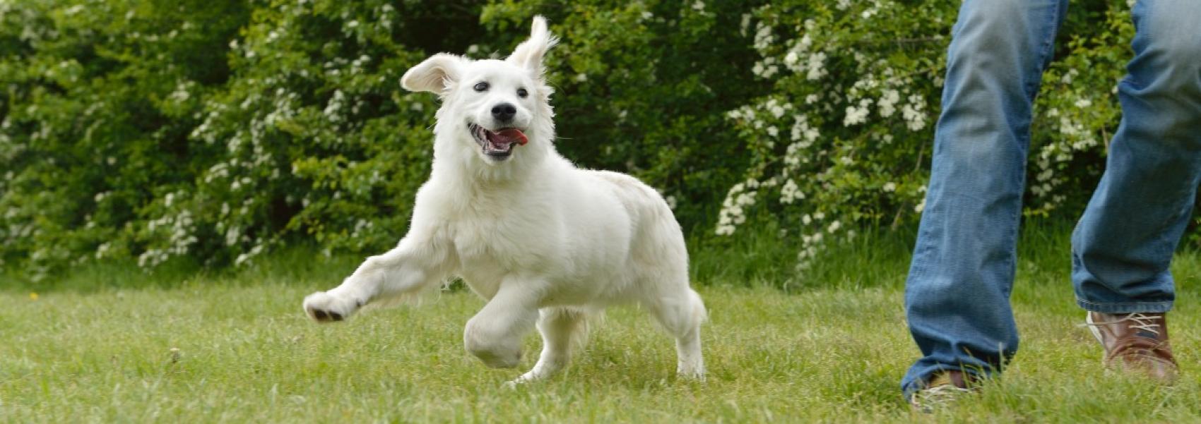 hondenzone in Uitlegger