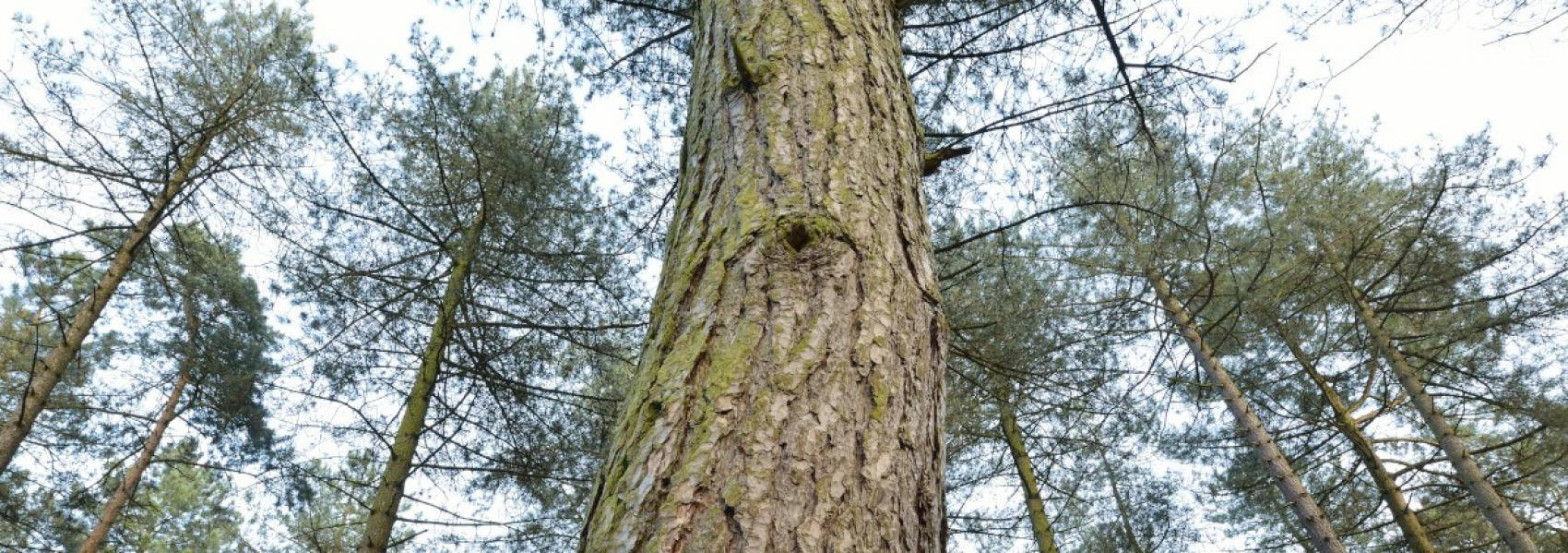 groep bomen van onderen gezien