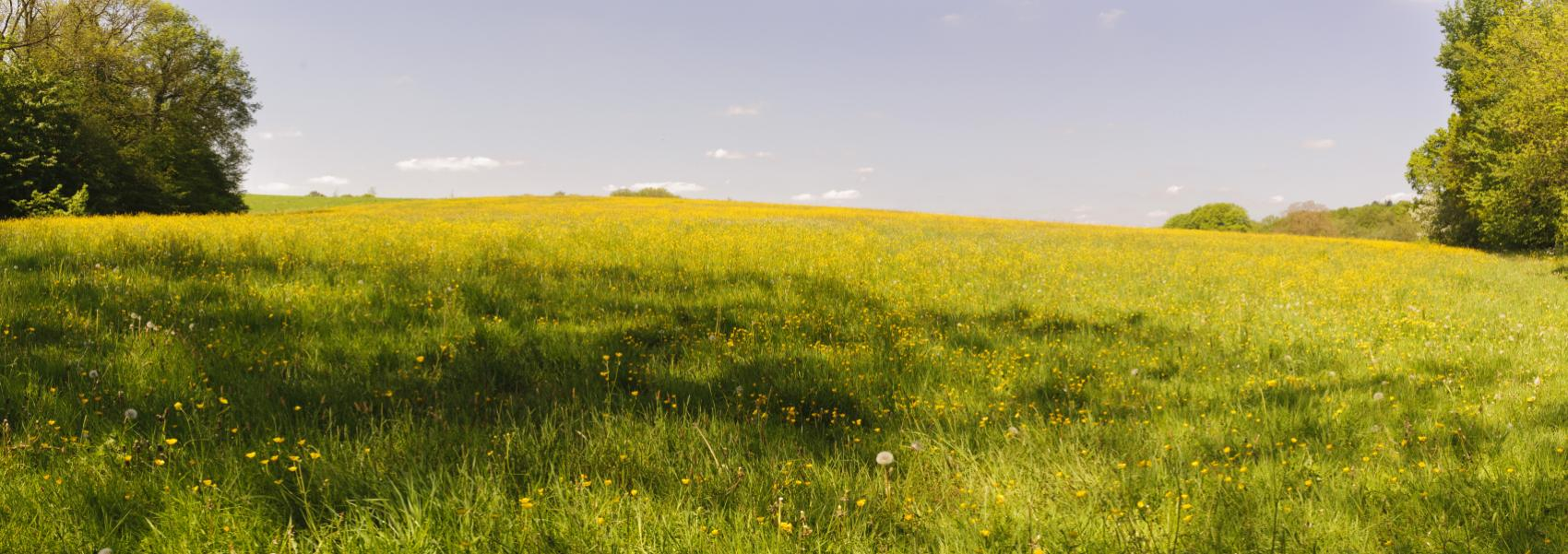 bloemen- en grasweide