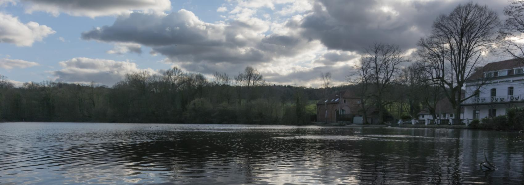 zicht op de vijver met op de achtergrond het bos en een huis