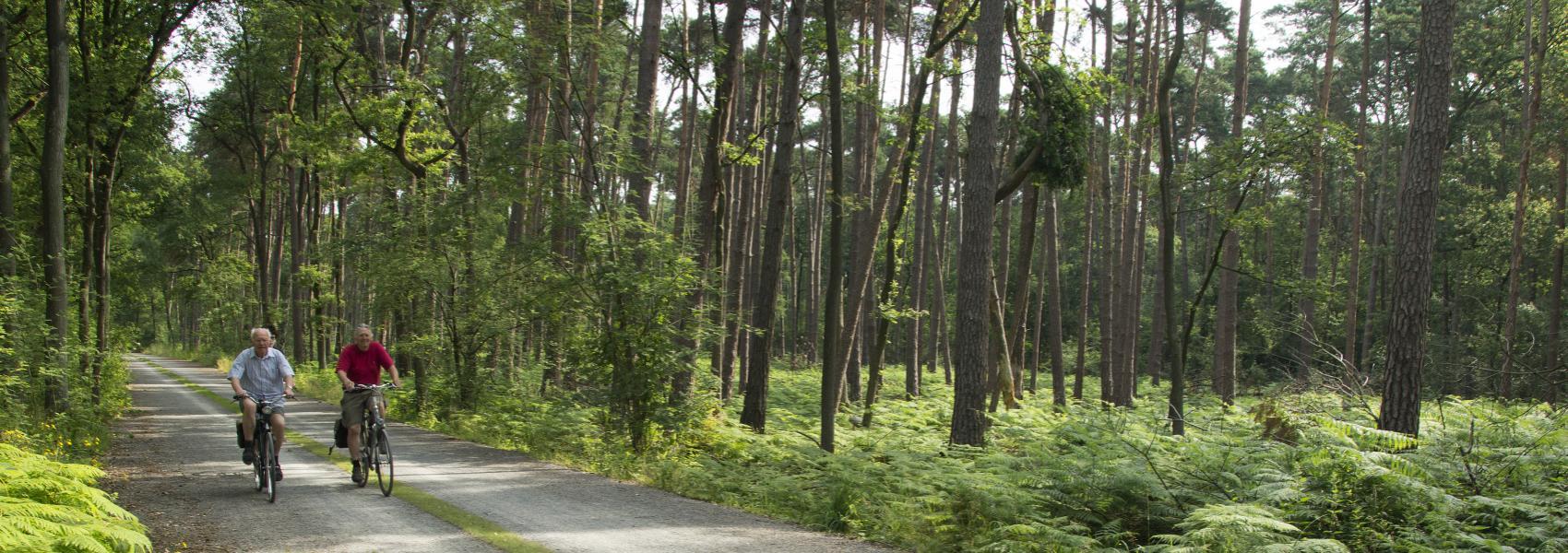fietsers op de verharde weg in het bos